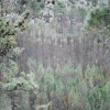 http://hervecharles.com/files/gimgs/th-23_23_corsica-4.jpg